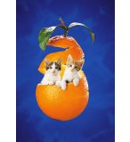 PUZZLE 2 CHATS DANS UNE ORANGE 260 PIECES - CLEMENTONI - 21103C