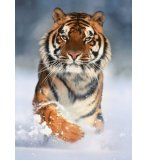PUZZLE TIGRE 1000 PIECES - PUZZLE CLEMENTONI - COLLECTION ANIMAUX - 39171