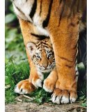 PUZZLE TIGRE DU BENGALE ET SON BEBE 500 PIECES - COLLECTION ANIMAUX SAUVAGES - CLEMENTONI - 35046