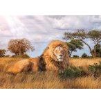 PUZZLE LE LION DANS LA SAVANE 1000 PIECES - COLLECTION ANIMAUX SAUVAGES - CLEMENTONI - 39479