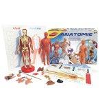 ANATOMIE - JOUSTRA - 47001 - JEU EDUCATIF CORPS HUMAIN