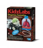 ORGANES HUMAINS - KIDZLABS 4M - KIT SCIENTIFIQUE ANATOMIE