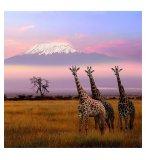 PUZZLE ANIMAUX D'AFRIQUE LES GIRAFES - AUBE KENYA 500 PIECES - COLLECTION VIE SAUVAGE  - NATHAN - 87201