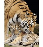 PUZZLE ANIMAUX : TIGRE ET SON BEBE 500 PIECES - COLLECTION VIE SAUVAGE - NATHAN - 87234