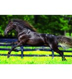 PUZZLE CHEVAL AU GALOP 500 PIECES - EDUCA - 15148
