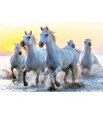 PUZZLE CHEVAUX BLANCS AU COUCHER DU SOLEIL 1000 PIECES - COLLECTION ANIMAUX - EDUCA - 17105