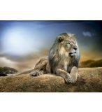 PUZZLE SA MAJESTE : LION 1000 PIECES - COLLECTION ANIMAUX SAUVAGE - EDUCA - 16292